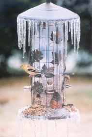 icy birdfeeder with finch